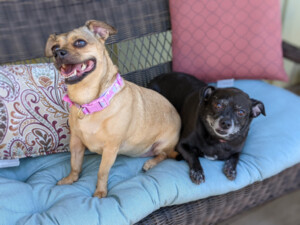 Liza & Lucy - bonded pair
